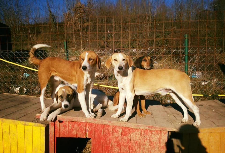 Glade og takknemlige hunder i hundegården.